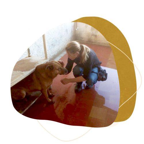 Dog Human Walk Hundeschule Hundepsychologie Hundetraining Tierschutz Angsthund