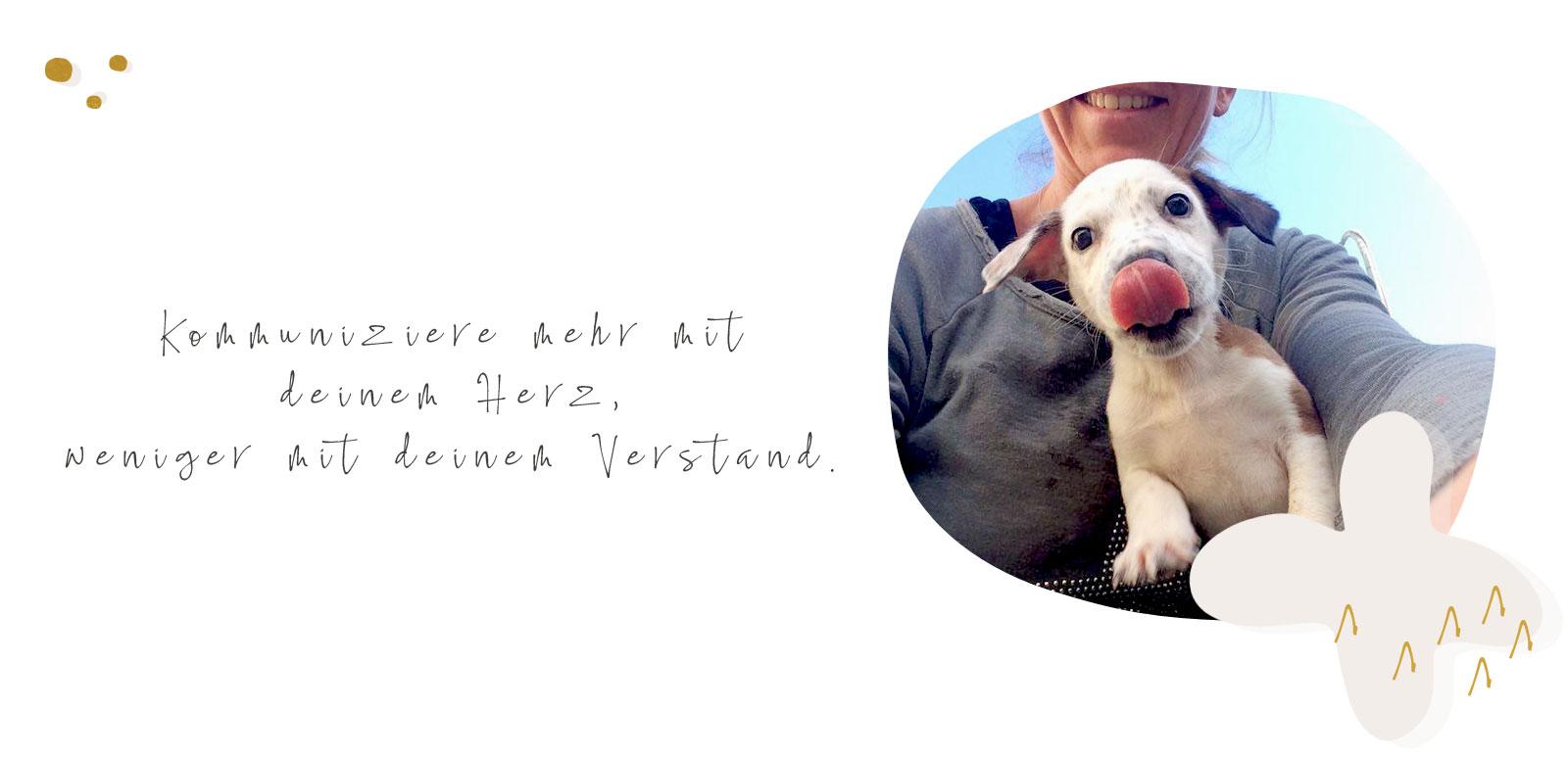 Dog Human Walk Hundeerziehung Hundetraining Hundepsychologie Bitburg Trier Wittlich