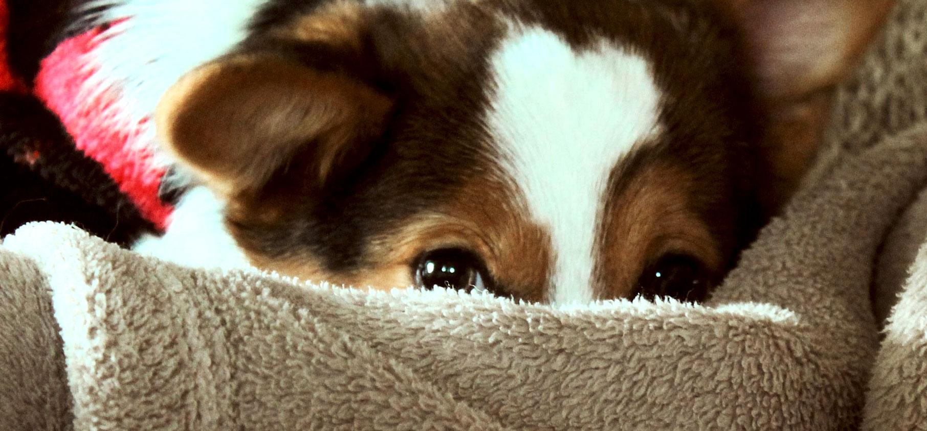Dog Human Walk Hundeschule Hundepsychologe Hundetraining Bitburg Trier Wittlich Mythen