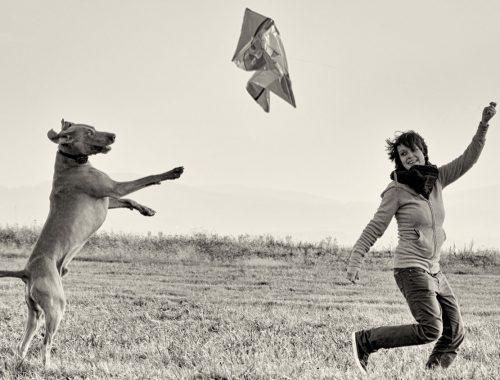 Dog Human Walk Hundeschule Hundepsychologe Hundetraining Bitburg Trier Wittlich Vertrauen und Bindung